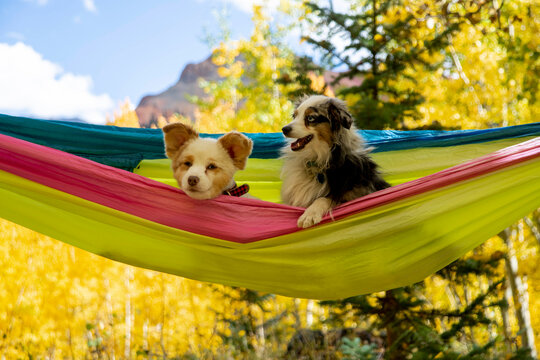 Dogs resting in hammock in forest during autumn