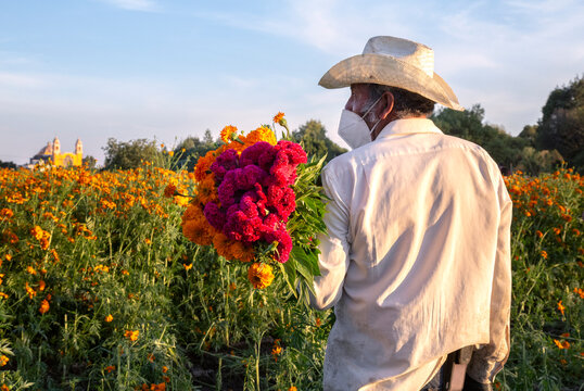 Mexican farmer carrying orange and cherry cempasuchil flowers