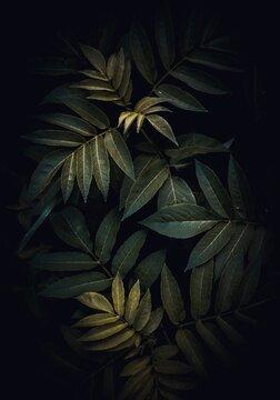 green plant leaves in the garden in autumn season