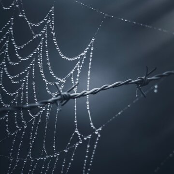 raindrops on the spider web in the nature in autumn season