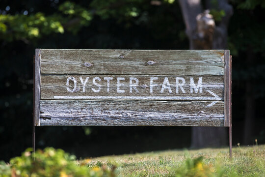 Wooden Oyster Farm Sign on grassy hill