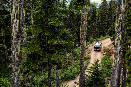 Drone view of modern vehicle driving along logging road near coniferous trees during trip through green forest in British Columbia, Canada