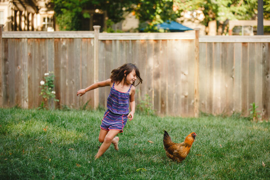 A happy child plays barefoot with a chicken in her backyard garden