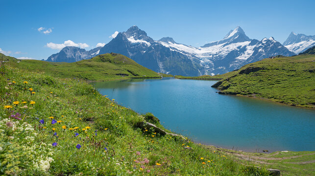 pictorial hiking destination Bachalpsee, view to mountain range and flower meadow, Bernese Oberland