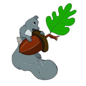 Grey Squirrel hugging an acorn