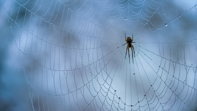 Spider in his web on a damp day with mist droplets on the strands of his web