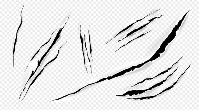 Cat marks, claws scratches isolated vector pets or wild animal nails rip, tiger or bear paws sherds on transparent background. Lion, monster or beast break, , realistic 3d traces on paper texture set