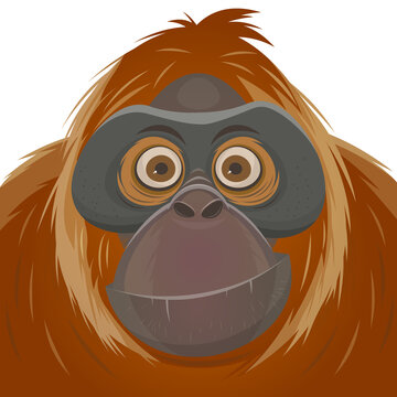 cartoon illustration of an orangutan ape
