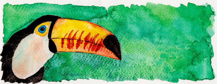 Portrayal of a colorful toucan in green background. Watercolor painting.