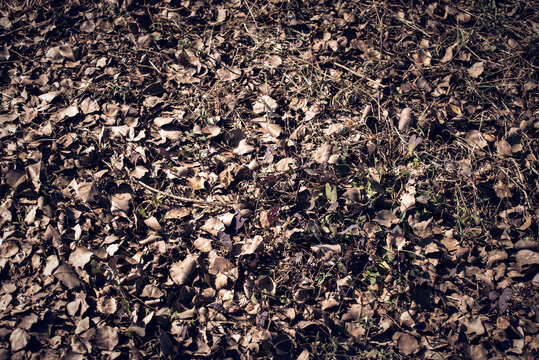 Dry leaves lying down on ground as a background