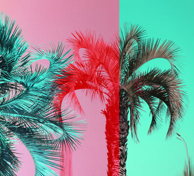 Retro photo color tropical palm trees in the South