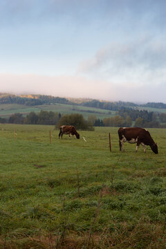Idyllic eco-friendly farm life in eastern Europe. Sunrise in autumn over the pasture with cows.