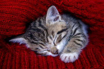 Small smiling striped kitten lying on back sleeping on white blanket. Concept of cute adorable pets cats.