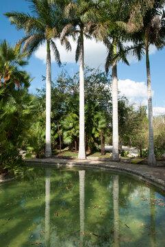 Cozumel Island Park Palm Trees