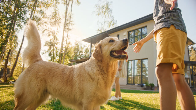 Smiling Beautiful Family of Four Play Catch flying disc with Happy Golden Retriever Dog on the Backyard Lawn. Idyllic Family Has Fun with Loyal Pedigree Dog Outdoors in Summer House.