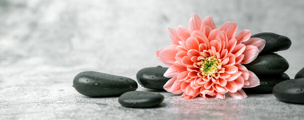 black spa stones and pink flower on white marble background. beauty treatment concept. banner copy space