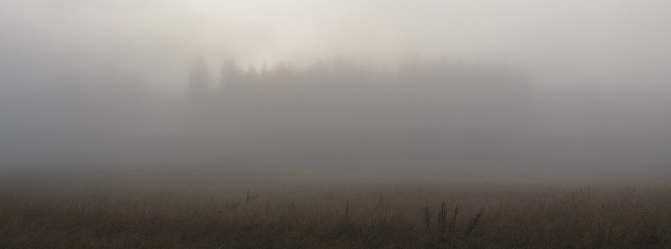 fog in the forest - meadow in the foreground and the silhouette of the forest in the background in the haze