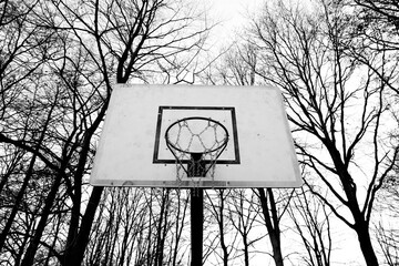basketball backboard surrounded by trees