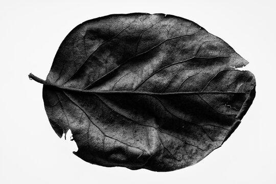 Minimalist macro leaf
