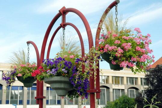 Ville de Saint-Avold, fleurs suspendues en centre ville, département de Moselle, France
