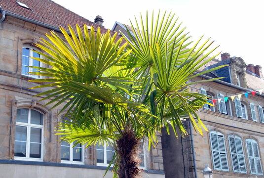 Ville de Saint-Avold, façades d'habitation et palmier en premier plan, département de Moselle, France