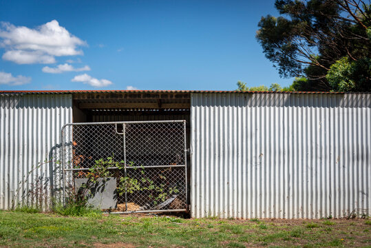 A siver corrugated shed with a tin roof and metal gate overgrown with vine against a blue sky with clouds