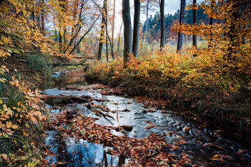 Dry golden leaves floating on the river flowing through the forest