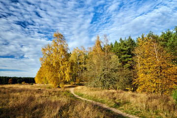path in the meadow and birch grove during autumn