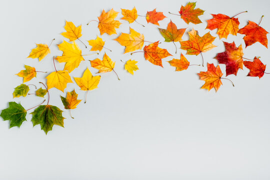 Autumn leafs colorful rainbow color gradient summer autumn season change concept. Top view