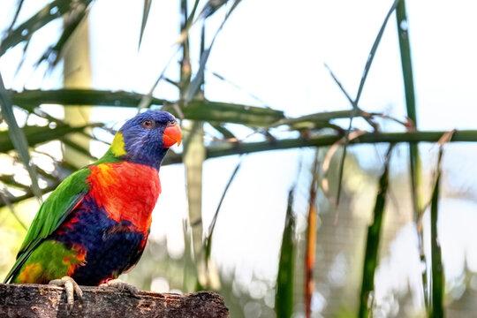 Perruche au jardin botanique en Guadeloupe