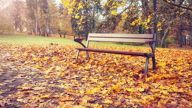 Empty bench in a park in autumn, retro colors toned picture.