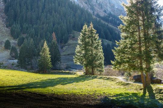 Sonnendurchflutete Nadelbäume in herbstlicher Landschaft