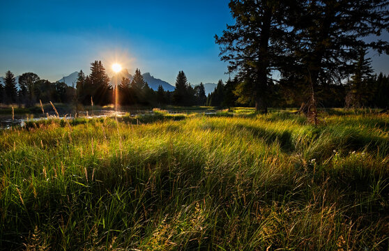 Last rays of daylight catch grasses  by the Beaver Dam on the Snake River. Grand Teton National Park, Wyoming