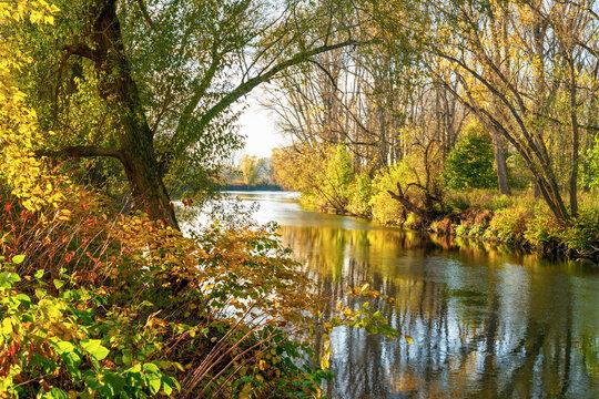 Die Sieg kurz vor der Mündung in den Rhein im Herbst
