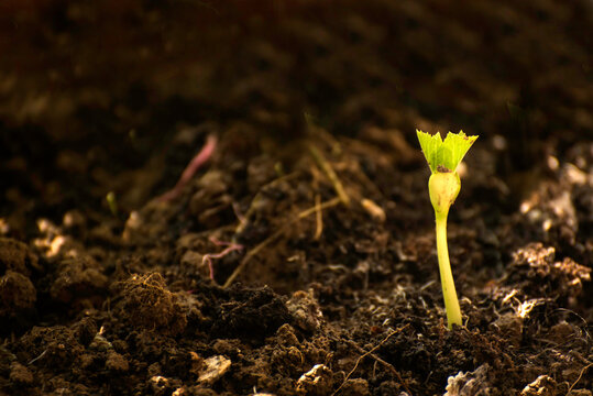 Close-up of green sprout growing out from soil in the morning light