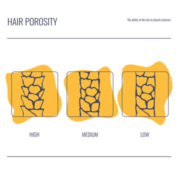 Hair porosity types classification set. Strand with low, normal and high cuticle porosity. Anatomical structure linear scheme. Outline vector illustration.