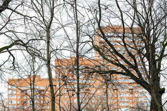 bare tree trunks and orange high-rise apartment house on background on overcast autumn day (focus on trees on foreground)