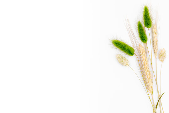 Wheat grass on white studio background. Natural elements decoration style