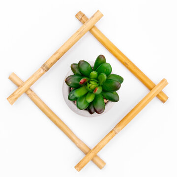Green succulent in bamboo frame on white studio background