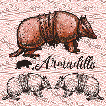 Vintage illustrations of an armadillo on an abstract background - color and monochrome sketch drawing. Template for creativity, print, logo.