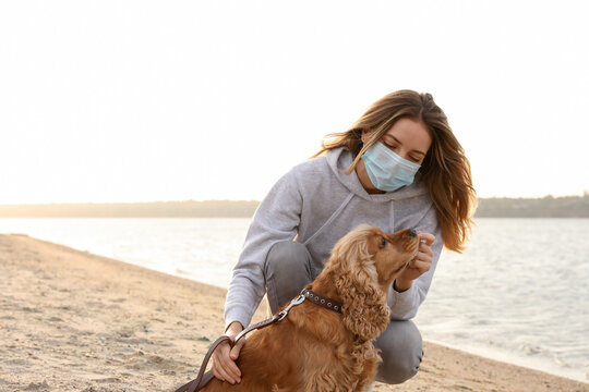 Woman in protective mask with English Cocker Spaniel on beach. Walking dog during COVID-19 pandemic