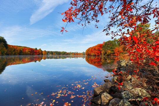 Beautiful New England Fall Foliage with water reflections at sunrise , Boston Massachusetts.