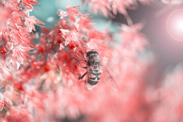 bee pollinating beautiful pink flowers on blurred natural background, summer concept