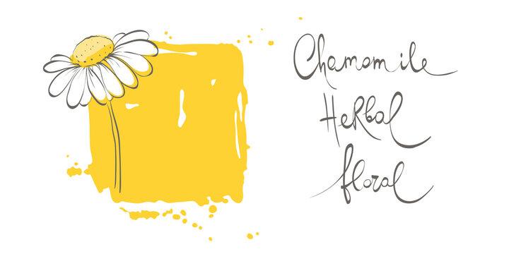 Decorative daisies. Vector design element, border, frame of chamomile.