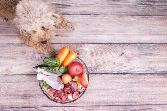 Obedient healthy dogs posing with barf raw meat on wooden surface