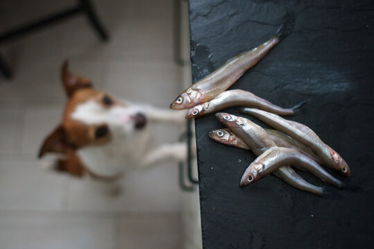 the dog eats fish. Pet in the kitchen indoors