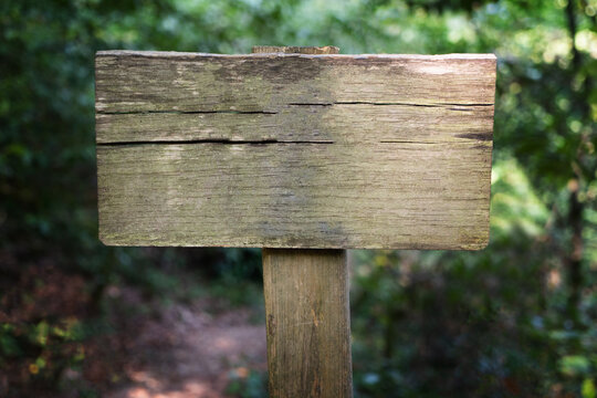 Blank wooden signboard with copy space in green forest, empty place for text. Yew-boxwood grove, Sochi National Park