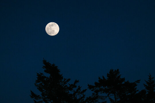 Low angle view of a full moon rising over the silhouette of a forest