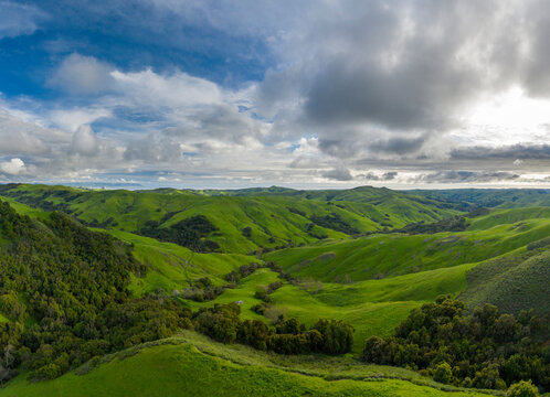 Green Rolling Hills Idyllic Scene in California After Heavy Spri
