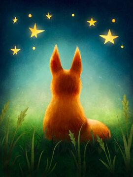 Little cute  red fox